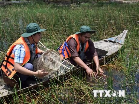 """Trải nghiệm """"một ngày làm ngư dân"""" tại Vườn quốc gia Tràm Chim"""