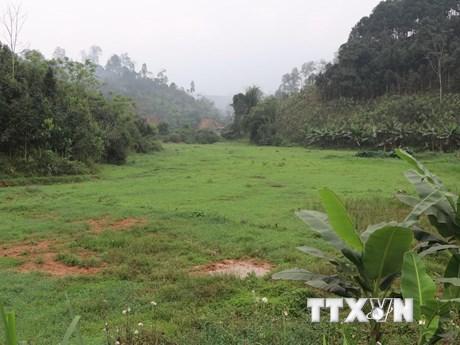 Công ty khai khoáng ở Yên Bái 'biến' ruộng lúa thành đồng hoang | Môi trường | Vietnam+ (VietnamPlus)