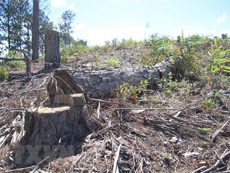 Bắt quả tang nhóm đối tượng phá rừng tại thành phố Đà Lạt