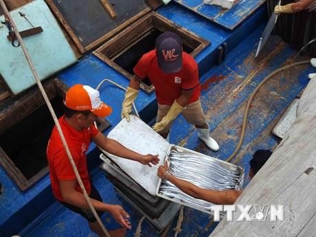 [Photo] Ngư dân Quỳnh Lưu nhộn nhịp mùa thu mua cá hố