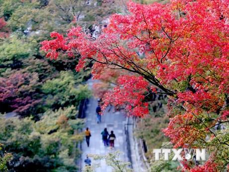 Thơ thẩn ngắm nước Nhật trong sắc Thu vàng quyến rũ