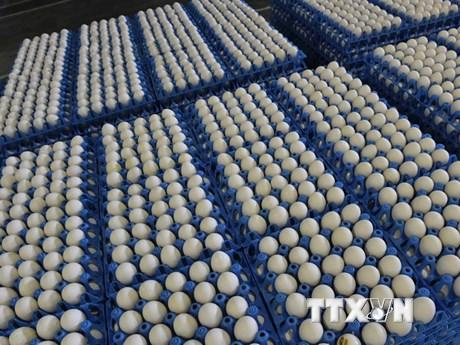 EU lên kế hoạch quản lý khủng hoảng sau vụ bê bối trứng bẩn