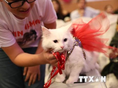 Hàng trăm chú mèo quy tụ tại cuộc thi mèo đẹp tại Thổ Nhĩ Kỳ