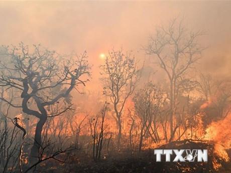 Tổng thống Brazil: Cháy rừng Amazon là ''vấn đề nội bộ'' của khu vực