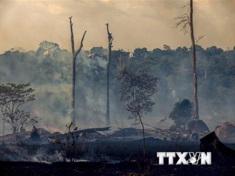 Rừng Amazon vẫn cháy âm ỉ sau trận cháy lớn hồi tháng 8