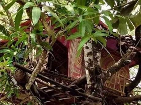 Myanmar: Người đàn ông tự cách ly bằng cách sống trên cây