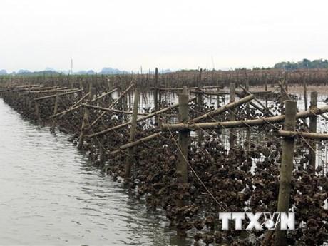 Thành lập Khu kinh tế ven biển Quảng Yên thuộc tỉnh Quảng Ninh