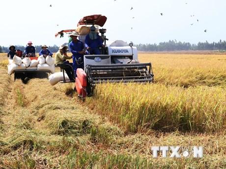 Ứng dụng công nghệ cao thúc đẩy ngành nông nghiệp phát triển vượt bậc | Kinh tế | Vietnam+ (VietnamPlus)