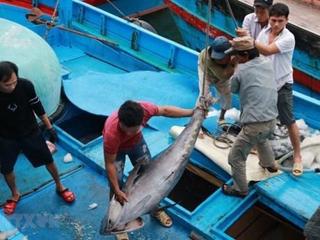Phối hợp, ngăn chặn xử lý triệt để khai thác hải sản bất hợp pháp