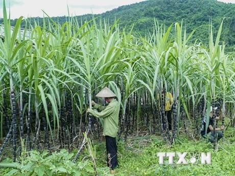 Điều tra chống bán phá giá với đường mía nhập khẩu từ Thái Lan