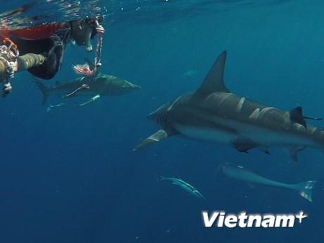 Thử thách du lịch mạo hiểm lặn cùng cá mập tại Nam Phi