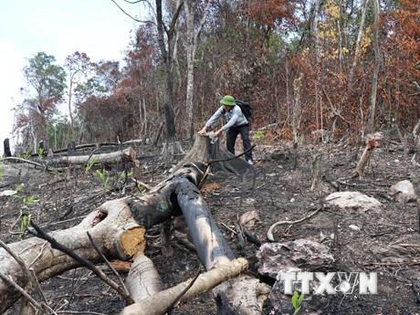 Phú Yên: Các vụ xâm hại rừng thuộc di tích lịch sử quốc gia ở Sơn Hòa