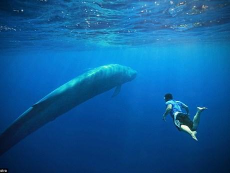 Khám phá tour du lịch mạo hiểm cùng các con cá voi xanh khổng lồ