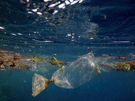 10 khẩu hiệu kêu gọi cộng đồng chung tay làm cho thế giới sạch hơn