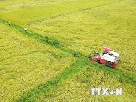 Miền Bắc phấn đấu đạt sản lượng lúa Đông Xuân hơn 7 triệu tấn