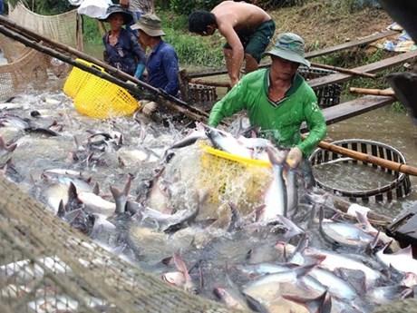 Nông sản Việt Nam chú trọng chinh phục thị trường nội địa