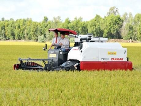 Xây dựng thương hiệu lúa gạo Việt: Phát triển chuỗi giá trị lúa gạo