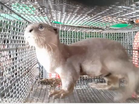 Hoàn thiện pháp luật động vật hoang dã: Ghi nhận ở các cơ sở nuôi nhốt