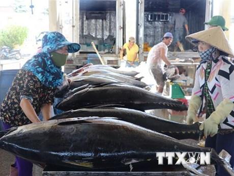 Xuất khẩu cá ngừ đại dương của Việt Nam tăng trưởng khá  | Kinh doanh | Vietnam+ (VietnamPlus)