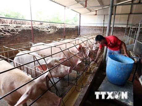 Ngành chăn nuôi chủ động được nguồn cung dịp cuối năm | Kinh doanh | Vietnam+ (VietnamPlus)