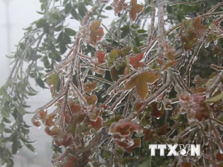 Hình ảnh đỉnh núi Mẫu Sơn ở Lạng Sơn xuất hiện băng giá