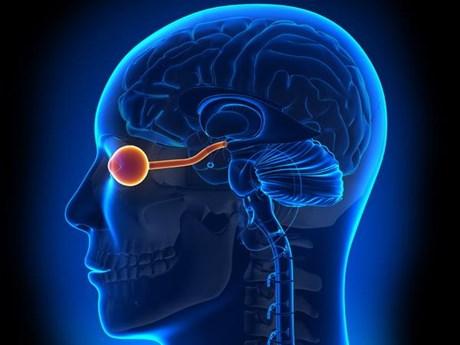 Phương pháp mới giúp chữa trị bệnh viêm tủy thị thần kinh | Khoa học ứng dụng | Vietnam+ (VietnamPlus)
