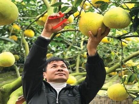 Công bố nhãn hiệu tập thể sản phẩm cam, bưởi Mường Động