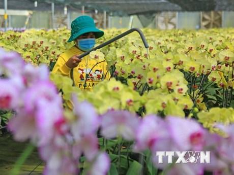 Thủ phủ hoa Lâm Đồng chuẩn bị cho đợt cao điểm vụ Tết Nguyên đán 2021