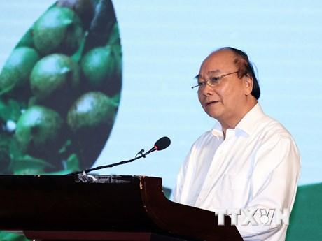 Thủ tướng Nguyễn Xuân Phúc: Cây mắc ca ''đi sau nhưng phải về trước''