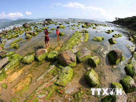 Ngắm nhìn bãi đá Nam Ô phủ rêu xanh ngắt đẹp lạ lùng