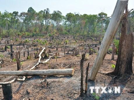 Gia Lai: Đề nghị chuyển hồ sơ vụ mất 1.200ha rừng sang công an xử lý    Pháp luật   Vietnam+ (VietnamPlus)