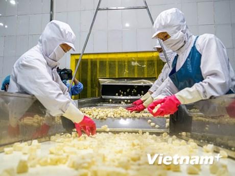 Cận cảnh quy trình chế biến dứa xuất khẩu tại nông trường Đồng Giao   Xã hội   Vietnam+ (VietnamPlus)