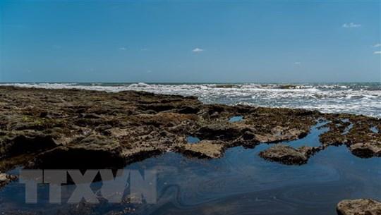 Brazil cấm đánh bắt tôm tại khu vực bị ảnh hưởng bởi sự cố tràn dầu
