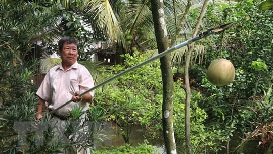 Nhà sáng chế miệt vườn và cây kéo cắt tỉa cành cây đa năng