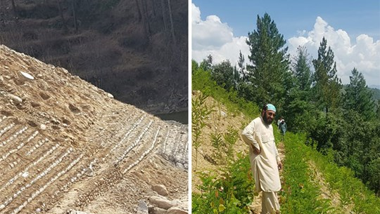 Những hình ảnh kỳ diệu từ dự án Sóng thần 10 tỷ cây xanh của Pakistan