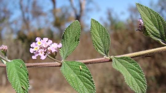 Costa Rica phát hiện hợp chất có khả năng chữa ung thư từ thực vật