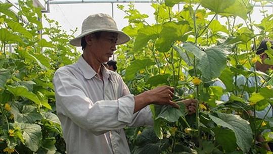 Đổi thay từ những ngôi làng 'nông thôn mới Hàn Quốc' tại Hậu Giang