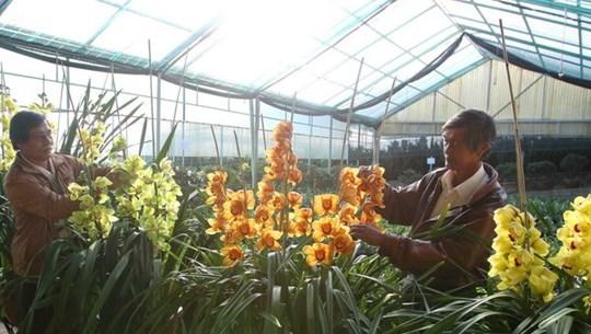 Lâm Đồng hỗ trợ liên kết sản xuất và tiêu thụ sản phẩm hoa