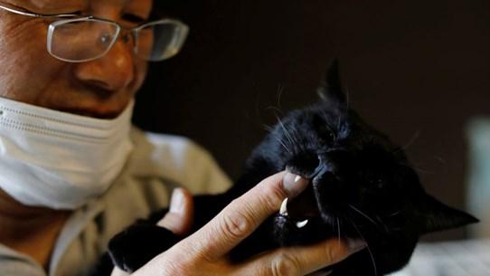 Cứu tinh của những chú mèo ở khu nhiễm phóng xạ nhà máy Fukushima