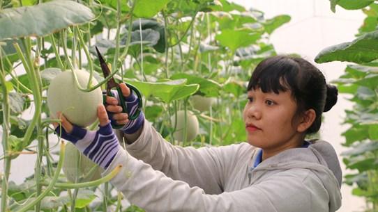 Ngành nông nghiệp duy trì sản xuất, thích ứng linh hoạt với đại dịch