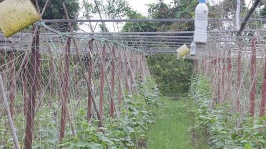 [Mega Story] Đi tìm phúc lợi của thiên nhiên từ nông nghiệp hữu cơ
