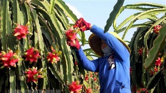 Thúc đẩy hợp tác thương mại và công nghiệp giữa Việt Nam-Ai Cập