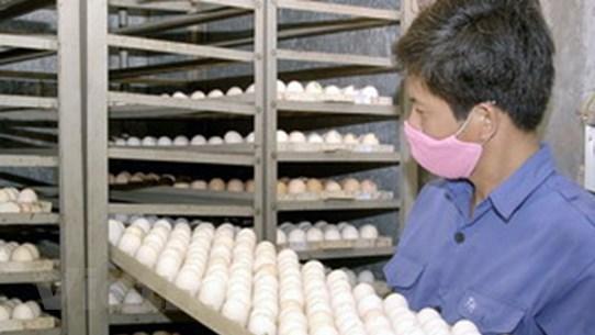 """Không có trứng Trung Quốc """"đội lốt"""" trứng gà ta"""