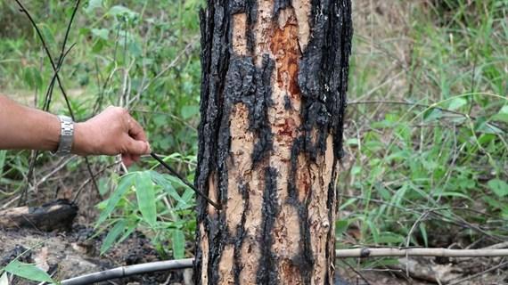 Lâm Đồng chỉ đạo xử lý đích danh tập thể, cá nhân để mất rừng