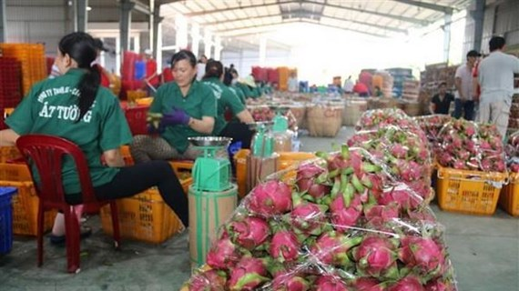 Doanh nghiệp cần làm gì để khai thác lợi thế xuất khẩu chính ngạch?