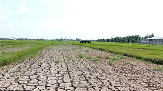 Xâm nhập mặn tại Đồng bằng sông Cửu Long sẽ ở mức cao trong tháng Tư