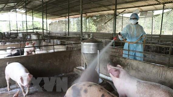 Ngăn chặn tối đa dịch tả lợn châu Phi lây lan vào miền Nam
