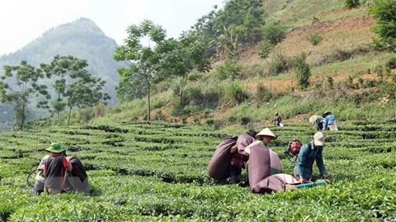 Hoàn thành việc sắp xếp và đổi mới 161 công ty nông, lâm nghiệp