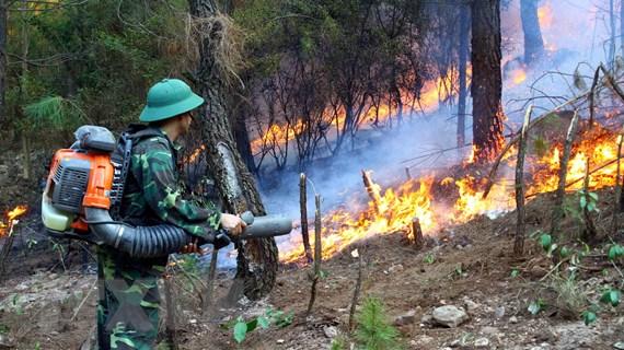 """Tình trạng cháy rừng vào mùa khô - Đừng để """"đến hẹn lại lên"""""""