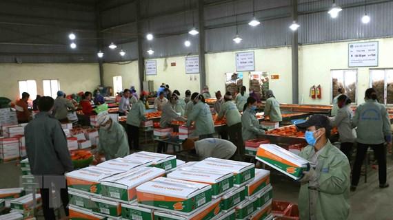 Rà soát sản xuất để điều hành hoạt động xuất khẩu nông sản